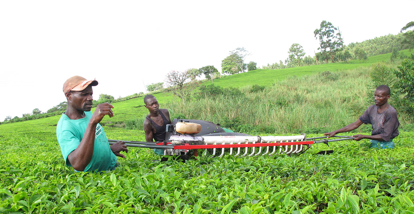 african agribusiness investment fund