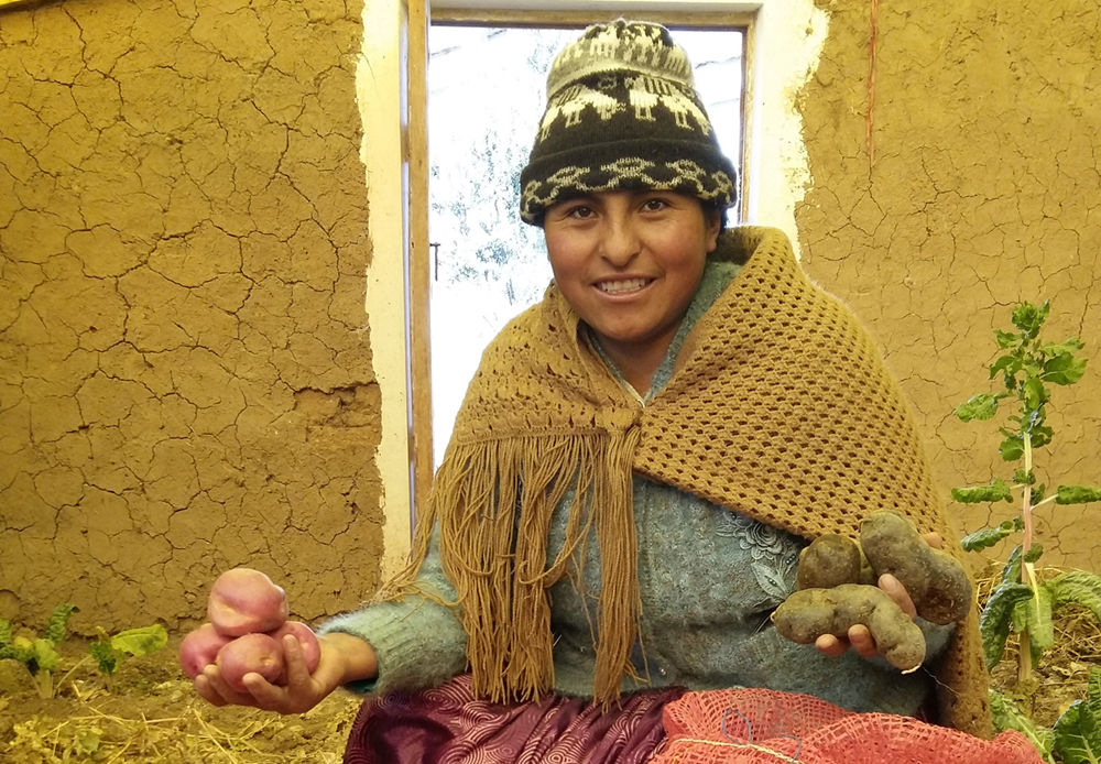 potato grower in Peru