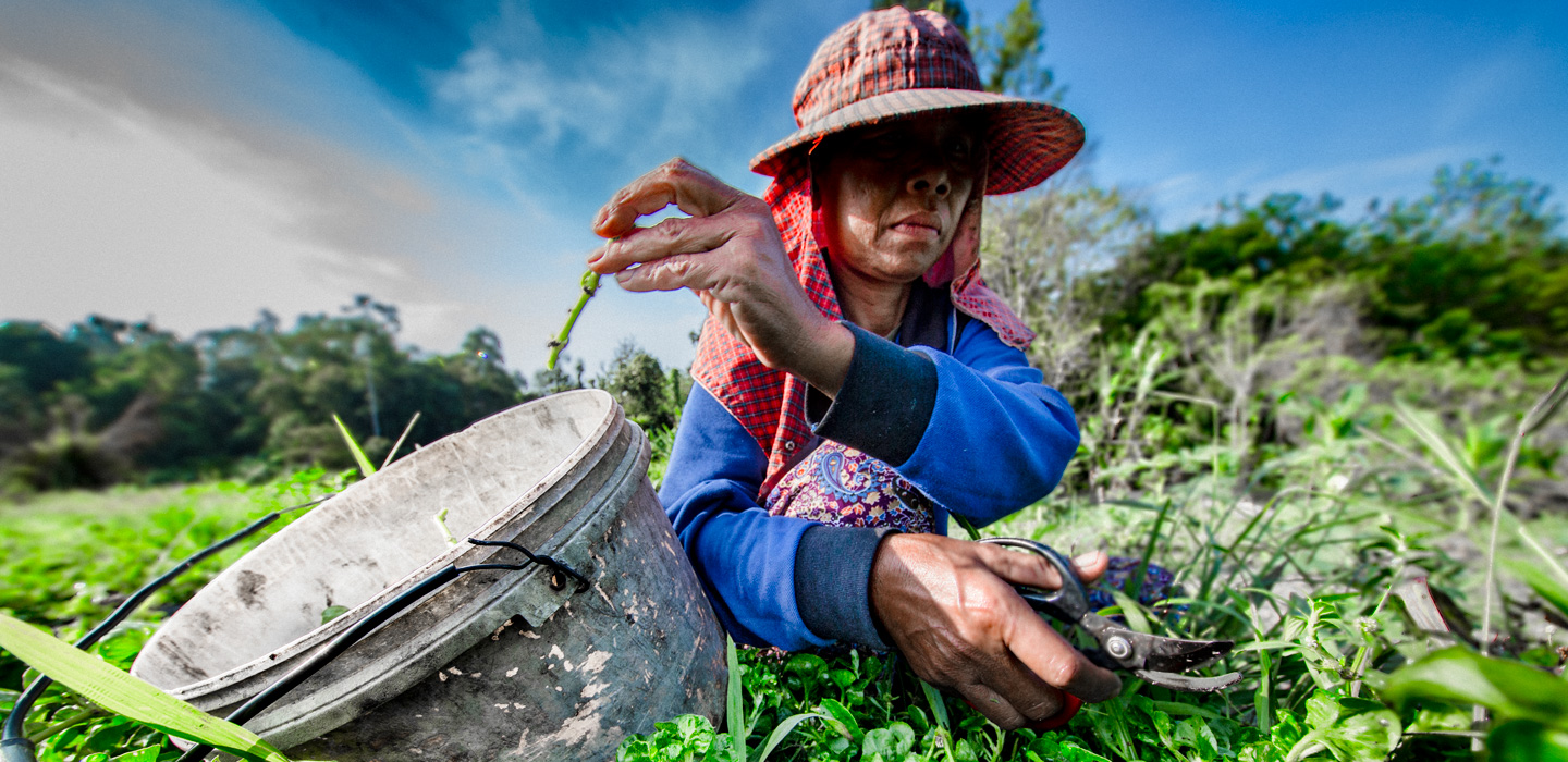 New IFAD fund launched to help prevent rural food crisis in wake of COVID-19